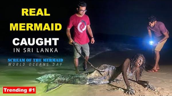 Real Mermaid caught in Sri Lanka   TRIP PISSO